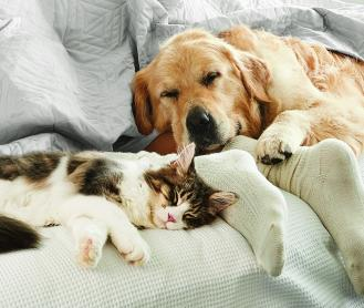 cat and dog home resting