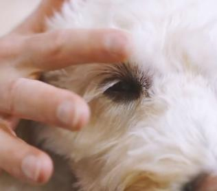 How to search for ticks on your dog